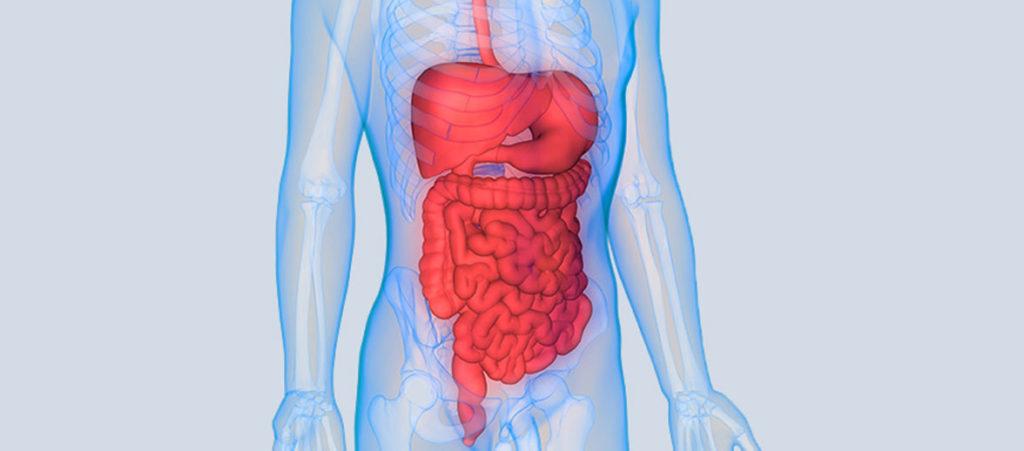 gastric health organs
